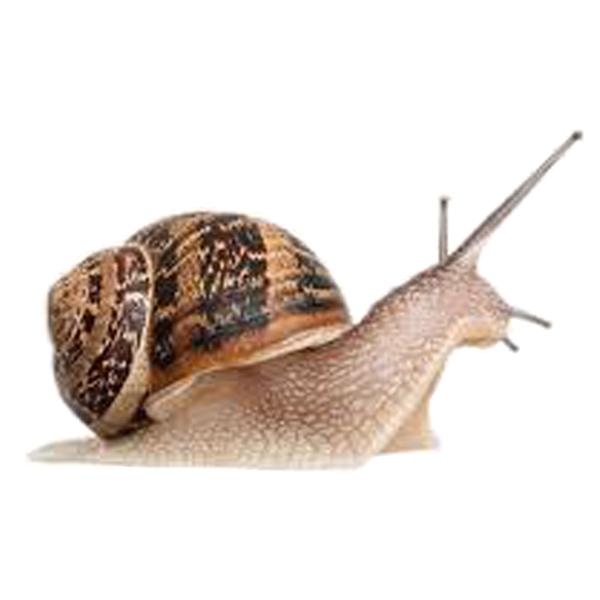 Snail Control